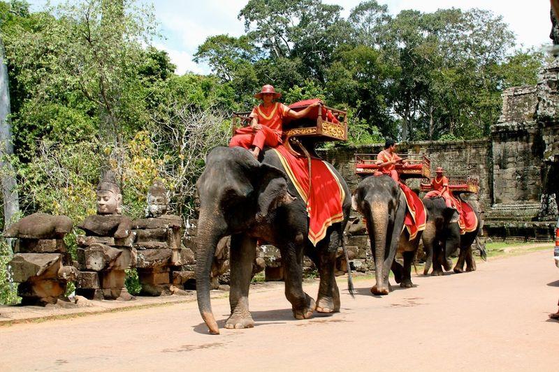 слоны Камбоджа